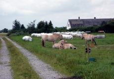 902-tustrup-johannes-med-gederne