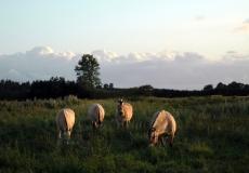 916-tustrup-johannes-med-gederne