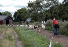 97-tustrup-johannes-med-gederne
